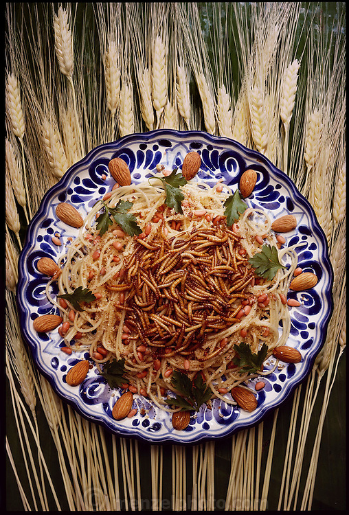 """Mealworm spaghetti (""""Spagheti a la Melanesia"""") prepared by Julieta Ramos-Elorduy, an entomologist in her Mexico City kitchen. She created a cookbook of recipes she collected for insect cuisine. Mexico City, Mexico. (Man Eating Bugs page 118.  See also page 7)"""