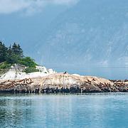 Sea Lions on rocks. Glacier Bay, Alaska.