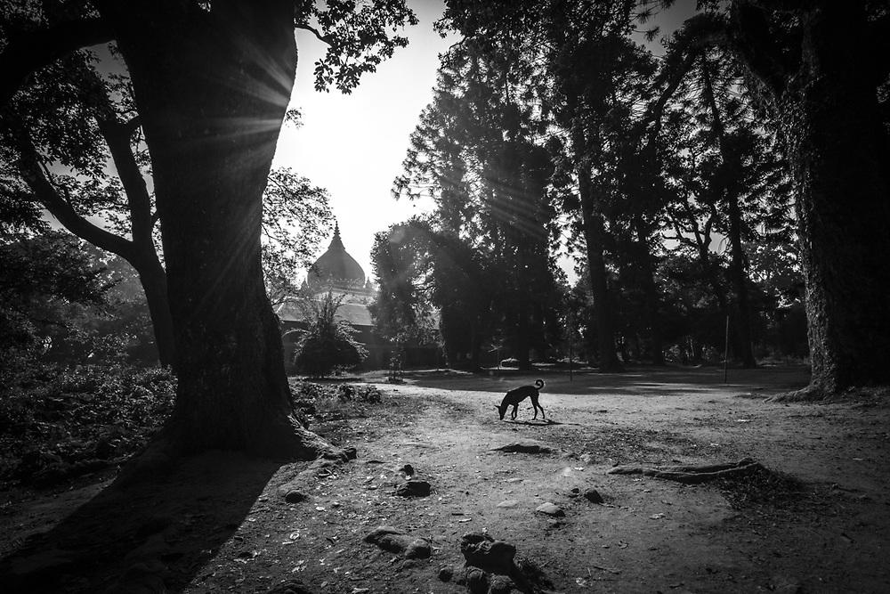 Morning scene in the forest around Pashupatinath temple of Kathmandu, Nepal.<br /> Photo by Lorenz Berna