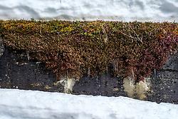 THEMENBILD - Tourengeher auf einer Schneewächte beim Kalser Tauernhaus während einer Skitour am Donnerstag, 1. April 2021. Kals, Österreich // Icicles hanging from a flowering plant on Monday, April 5, 2021. Kals, Austria. Kals, Austria. EXPA Pictures © 2021, PhotoCredit: EXPA/ Johann Groder