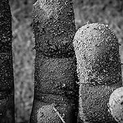 Dirt fingers outstretched, Brisbane, Australia (00 00)