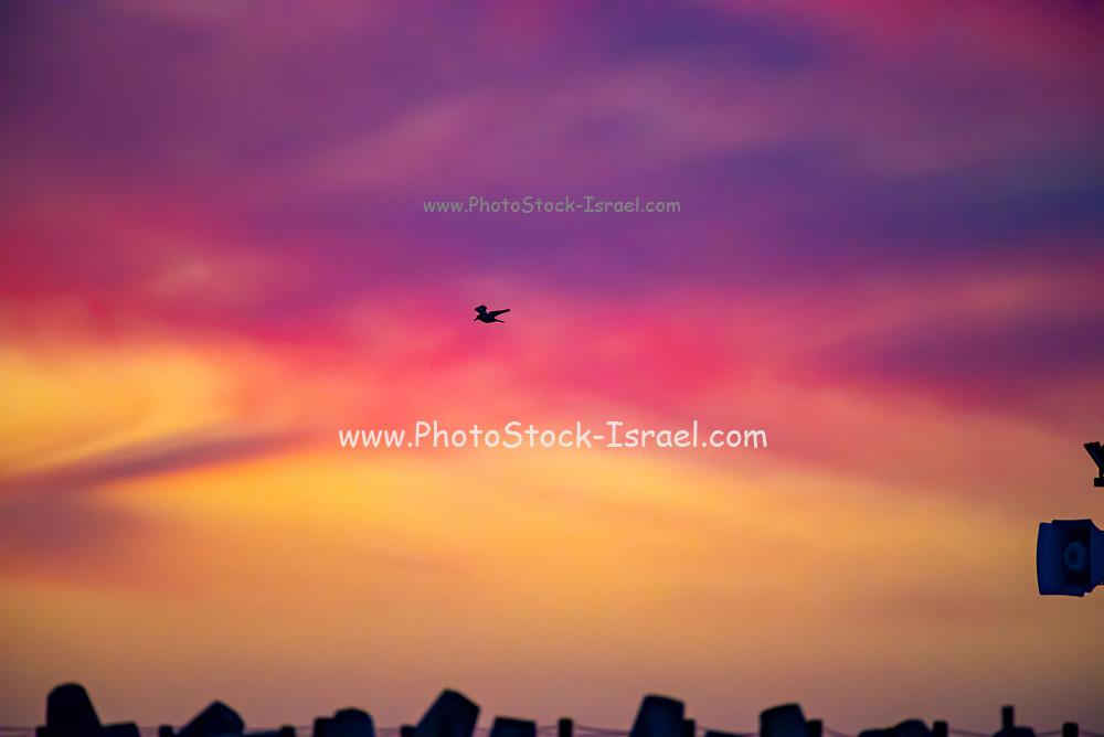 Beautiful Mediterranean Sun Set. As a bird crosses the sky. Photographed in Israel