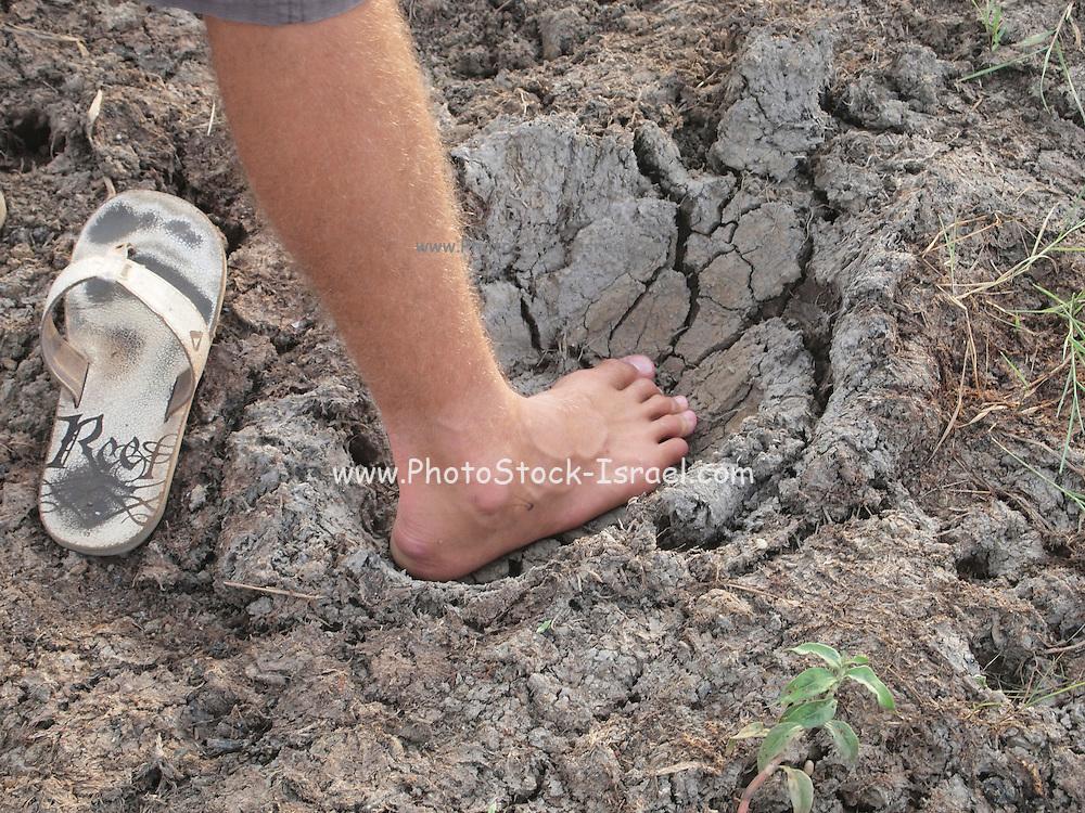Sri Lanka, Ampara District, Arugam Bay, man places foot in elephant footprint