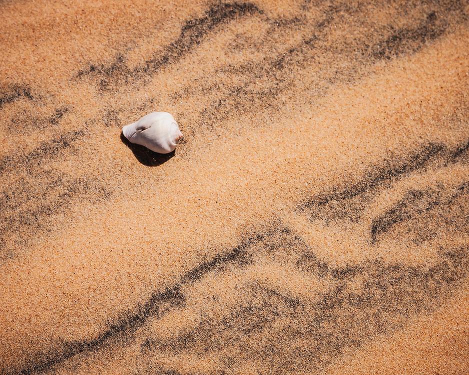 Shell on the dunes of Bazaruto archipelago
