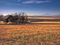 Warm evening light on an old abandoned cabin amid flat wheat farms and Mt Adams as seen in rural Klickitat County WA, USA