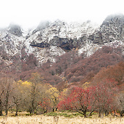 Valley de Chaudefour, autumn trees and first snow