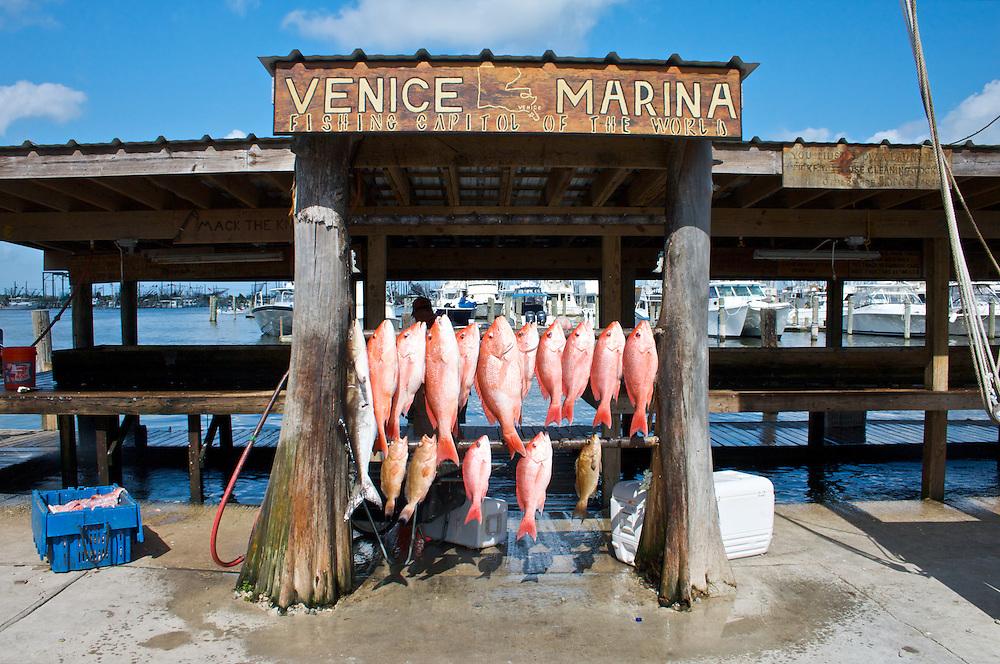 Venice, Plaqumines Parish, Louisiana, USA