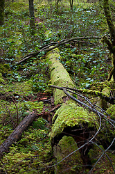 Forest Detail, Shaw Island, Washington, US