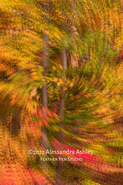 Mixwd autumn foliage colors, rendered with multiple exposure rotate and zoom (MERZ) effect.