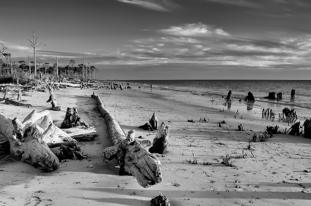 Black & White image of driftwood and tree stumps on a rural beach on Cape San Blas, Florida.