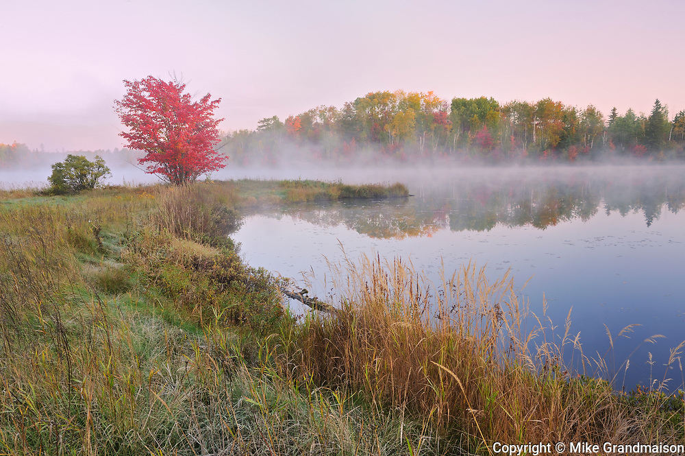 A red maple tree (Acer rubrum) in morning fog on the shore of St. Poithier Lake in autumn color<br />WOrthington<br />Ontario<br />Canada