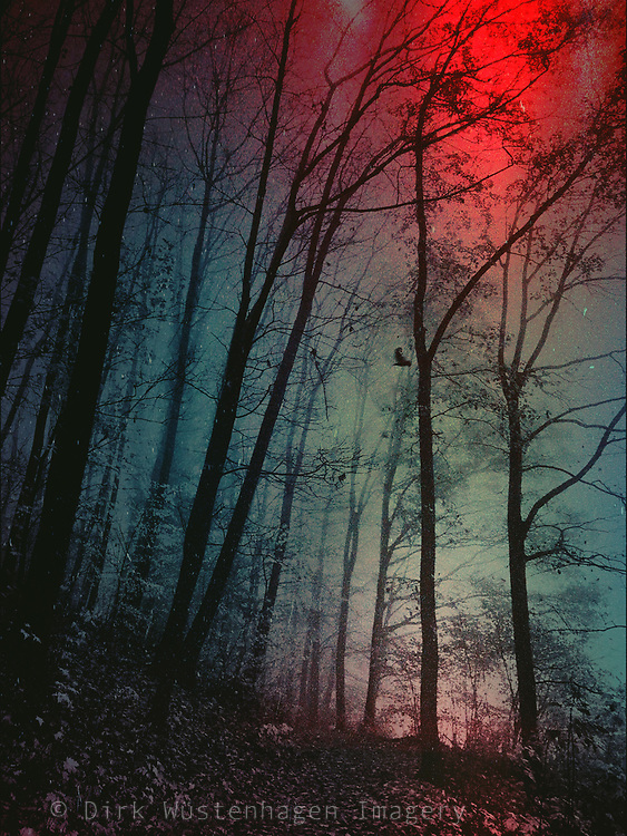Textured and tinted moody forest.