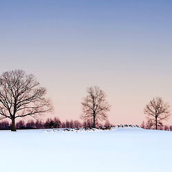 The bare branches of maple trees in winter silhouetted against a dawn sky on a farm in Hadley, Massachusetts.