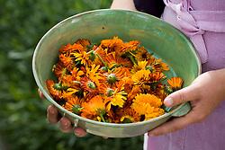 Bowl of calendula flower heads - marigolds