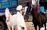 Pushkar 2011 Trading & Living