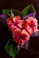 Tropical flowers, Four Seasons Resort Bora Bora, French Polynesia.