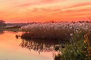 Marsh, East Hampton, NY