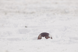 PHILADELPHIA - DECEMBER 8: A football sits in the snow during a game between the Philadelphia Eagles and the Detroit Lions on December 8, 2013 at Lincoln Financial Field in Philadelphia, Pennsylvania. The Eagles won 34-20. (Photo by Hunter Martin/Philadelphia Eagles/Getty Images) *** Local Caption ***