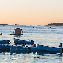 Seaweed harvesting boats in the harbor in Jonesport, Maine. Dawn.