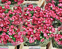 The worlds largest flower auction site in Aalsmeer, Netherlands. Image taken with a Nikon 1 V2 camera and 10-100 mm lens.