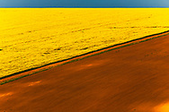 Rapeseed fields in Dobrudzha region