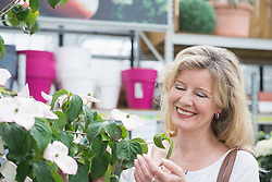 Mature woman looking at flowers in garden centre, Augsburg, Bavaria, Germany