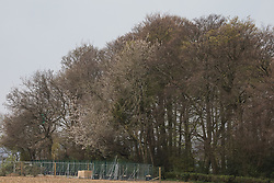 Wendover, UK. 28th April, 2021. Ancient woodland at Jones Hill Wood is viewed from across a field. Felling of Jones Hill Wood, which contains resting places and/or breeding sites for pipistrelle, barbastelle, noctule, brown long-eared and natterer's bats and is said to have inspired Roald Dahl's Fantastic Mr Fox, has resumed after a High Court judge refused environmental campaigner Mark Keir permission to apply for judicial review and lifted an injunction preventing further felling for the HS2 high-speed rail link.