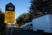 Roadsign near Dunalley, Tasmania, warning motorists to take care at night, due to endangered tasmanian devils crossing the road, or feeding on the roadkill already on the road.