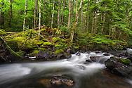 Trout Lake Creek in the rainforest in Sasquatch Provincial Park near Harrison Hot Springs, British Columbia, Canada