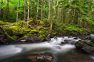 Trout Lake Creek in the rainforest in Sasquatch Provincial Park near Harrison Hot Springs, British Columbia, Canada