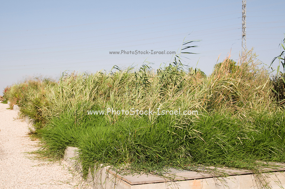 Israel, Hiriya, (a former waste dump) Constructed Wetland or Wetpark. An artificial marsh or swamp, created for anthropogenic discharge such as wastewater, stormwater runoff or sewage treatment,