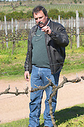 Daniel Pisano one of the brothers Pisano with his characteristic double pair of glasses and twirled moustache in the vineyard. Bodega Pisano Winery, Progreso, Uruguay, South America