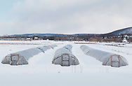 Chester, New York - Plastic greenhouses are surrounded by snow in a black dirt field on Feb. 19, 2015. ©Tom Bushey / The Image Works