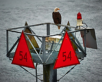 Bald Eagle on Channel Marker 54 From the deck of the MV Columbia (Alaska Marine Highway). Image taken with a Nikon D3x camera and 70-300 mm VR lens (ISO 400, 280 mm, f/5.6, 1/60 sec).