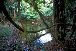 Family enjoying a swimming hole in a tropical jungle in Belize .