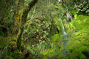 Landscape with a lush-green moss-covered cliff and a waterfall, Routeburn Track, South Island, New Zealand