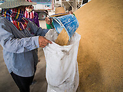 08 SEPTEMBER 2014 - BANG BAN, PHRA NAKHON SI AYUTTHAYA, THAILAND: Workers bag samples of rice for quality testing in a rice warehouse in Ban Bang, Phra Nakhon Si Ayutthaya province. Rice farmers in central Thailand are harvesting their rice crop. The race is on to get the rice harvested before the Chao Phraya River and its tributaries start their cycle of annual floods. Although the central plains have gotten less rain than normal, communities in northern Thailand are experiencing a heavy monsoon and flood gates upriver of the central plains have been opened. The flood waters are expected to reach Phra Nakhon Si Ayutthaya province by the middle of September. This year's rice crop is expected to be lower than last year's because many farmers planted less rice because the government subsidy program ended.      PHOTO BY JACK KURTZ