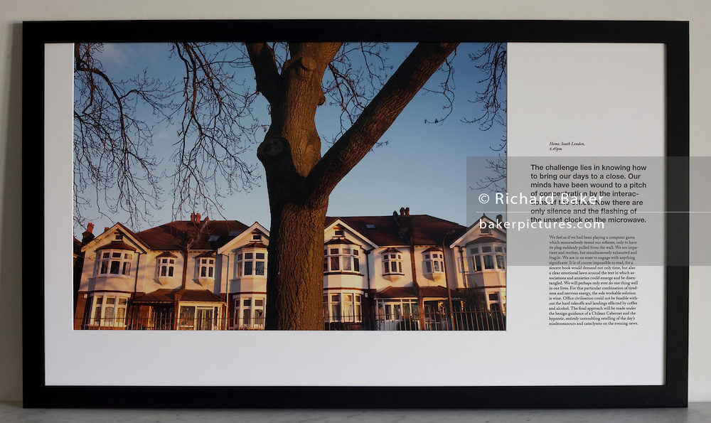 Trunk of an Ash tree in front of Edwardian era semi-detached houses on Ruskin Park, London.<br />