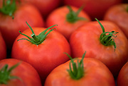 A selective focus, group of Greenhouse tomatoes on a table