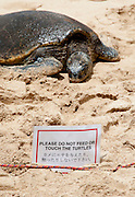 A sign warns visitors not to touch the turtles at Laniakea Beach on Oahu, Hawaii.