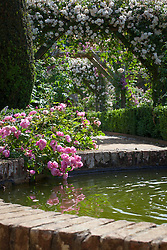 Rosa 'Raubritter' growing by the side of the fountain in the walled rose garden at Mottisfont. Rosa 'Adélaïde d'Orléans' on the arches beyond