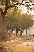 Unsurfaced road. Luangwa River Valley National Park, Zambia, Africa