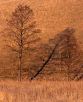 03.2015 Suwalszczyzna woj podlskie n/z cien drzewa fot Michal Kosc / AGENCJA WSCHOD