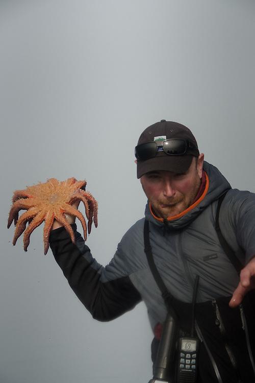 SV Maple Leaf First Mate Brandon Harvey shows off Sunflower Seastar (Pycnopodia helianthoides), Gulf Islands, British Columbia, Canada