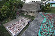 """Cacao beans dry on the patio of Luciano and Eugenia Sho. Mr. Sho switched from rice farming in 2004 and joined the TCGA in 2005. He now has 17,000 cacao trees and is one of the organization's most successful members. """"Thanks to the TCGA and Fair Trade for providing us great benefits. I have 13 children and many have been granted Fair Trade scholarships. I am very proud to belong to the TCGA."""" Toledo Cacao Growers' Association (TCGA), San Antonio, Toledo, Belize. January 28, 2013."""