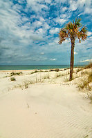 A lone palm stands of a gorgeous deserted beach on Florida's St. Joseph Peninsula on the northern Gulf Coast.