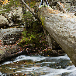A photographer on a fallen pine above Cascade Brook in New Hampshire's Franconia Notch State Park.  White Mountains.