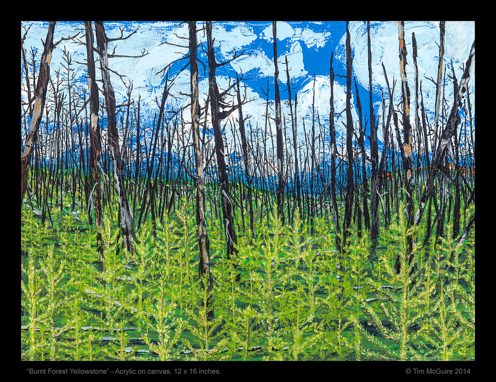 """""""Burnt Forest Yellowstone"""", Acrylic on Canvass, 12 x 16 inches.<br /> © Tim McGuire 2014"""