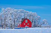 Red barn surrounded by trees covered by heavy hoarfrost<br />Near Deacon's Corner<br />Manitoba<br />Canada