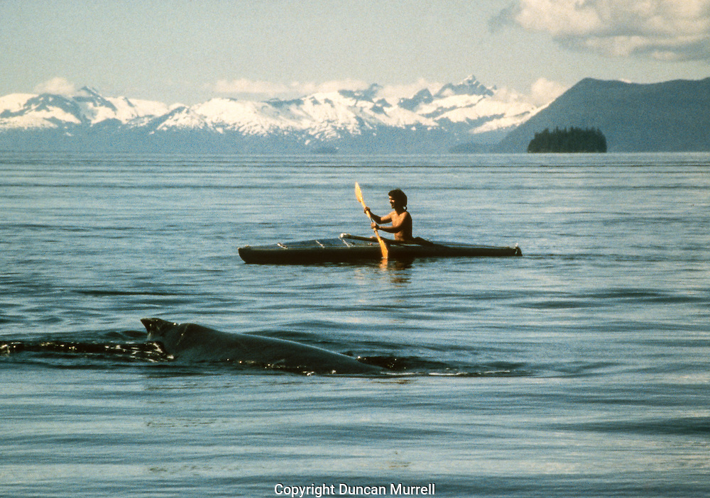 """This was my first ever memorable day kayaking with humpback whales in Southeast Alaska; an amazing day that set the tone for another 20 years of involvement there with the whales. It was a beautifully flat calm day out on the water and there was a large pod of humpback whales feeding in the vicinity of the Brothers Islands where we were moored with """"Avalon"""". It was the day when I realized that a kayak was the only way that I could really appreciate being around the whales without disturbing them or interrupting their natural feeding behaviour. I discovered that they are completely safe to be around and that I could manoeuvre the kayak more than adequately to stay out of their way. It was such an adrenaline-rush to be so close to them, and to be able to feel their power and energy transmitted through the water."""